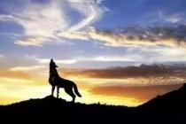 创业,一个从家狗变成狼的过程