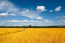 大丰收168:以农资为切入点 通过经销商入驻的模式把实惠带给农户